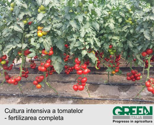 Cultura intensiva a tomatelor - fertilizarea completa