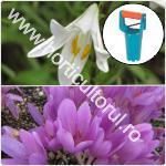Plantarea bulbilor toamna pentru flori de primavara