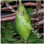 Cultura de lufa – buretele vegetal_1