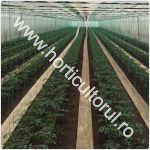 Plantarea tomatelor ciclu 1 primavara in solar