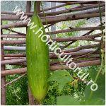 lufa – buretele vegetal-natural_1