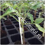Altoirea tomatelor-rosiilor-1