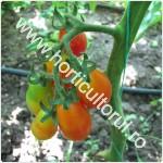 Defolierea la Tomate-Rosii_1