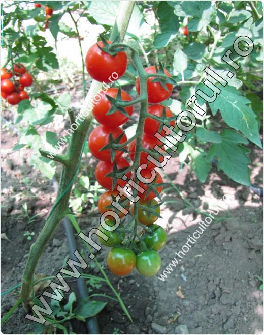Defolierea la Tomate-Rosii