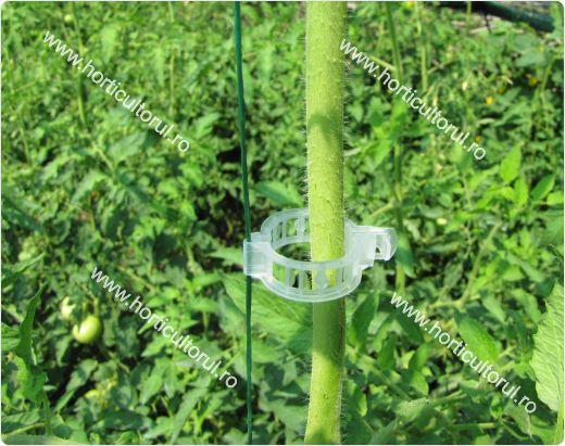 Fig. 8 Palisarea Tomatelor - Rosiilor in Solarii & Sere, cu ata