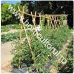 Palisarea tomatelor-rosiilor in gradina-camp_1