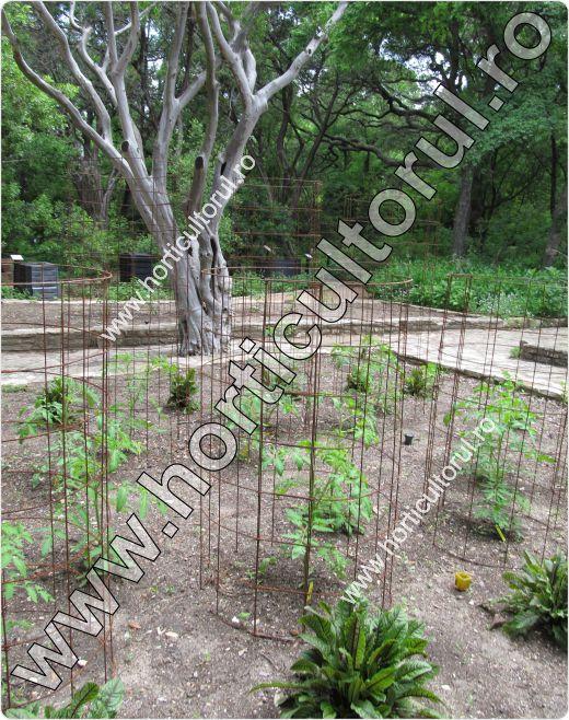 Palisarea tomatelor-rosiilor in gradina-cusca sarma