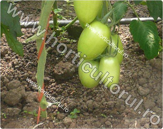 Palisarea tomatelor-ata