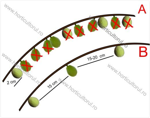 Rarirea fructelor la Piersic si Nectarin