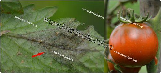 Tratamente-Stropiri BIO pentru Mana la Tomate_2