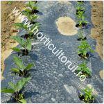 Mulcirea solului in sere