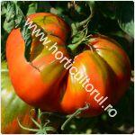 Cultivarea tomatelor-rosiilor in gradina_150