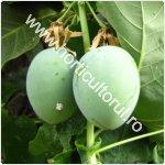 Passiflora subpeltata_150
