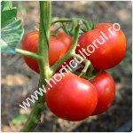 Secrete pentru coacerea fructelor de tomate_150