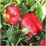 Cultivarea gogosarului in gradina_camp_150