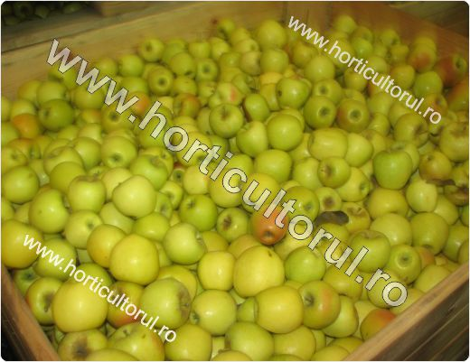 Pastrarea si Depozitarea merelor