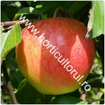 Recoltarea merelor_150