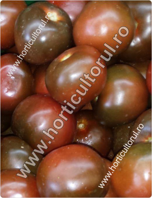 Fig. 2 Tomatele Kumato