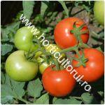 Tomatele Minaret F1-cultivare_150