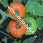 Tomatele-Rosiile MARMANDE_150
