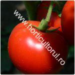Tomatele Sandoline F1-cultivare_150