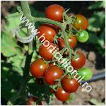 Tomatele cherry Kumato_150