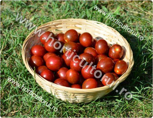 Tomatele cherry Kumato