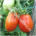 Tomatele - rosiile ROMA_150