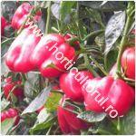 ardeiul-yecla-f1-cultivare_150