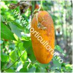 Obtinerea-Recoltarea semintelor de castravete_150