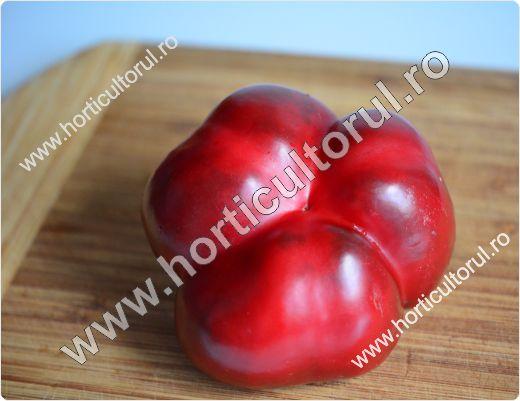 Obtinerea-recoltarea semintelor de ardei_1