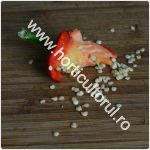 Obtinerea-recoltarea semintelor de ardei_150