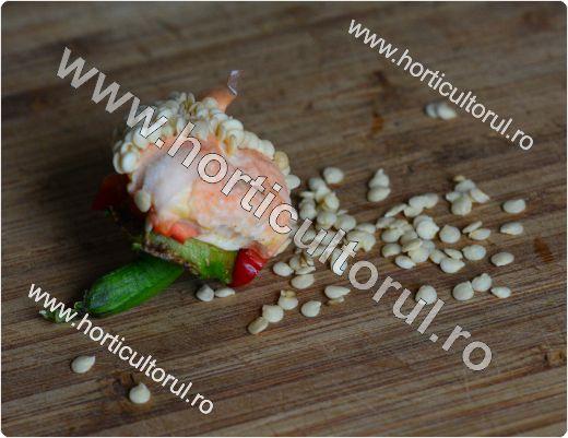 Obtinerea-recoltarea semintelor de ardei_3