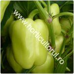 recoltarea-ardeiului-gras-galben-verde_150
