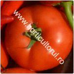 Tomatele Bobcat F1-cultivare_150