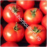 Tomatele Izmir F1 -cultivare_150