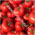Tomatele Qualitet F1 -cultivare_150