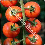 Tomatele-Rosiile Cherry-cultivare_150