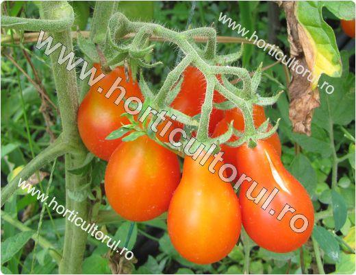 Tomatele-Rosiile Cherry-cultivare_4