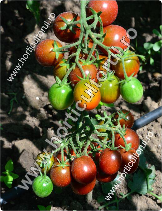 Tomatele-Rosiile Cherry-negre--cherry-kumato