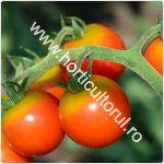 Tomatele cherry Chelsea Mini F1-cultivare_150