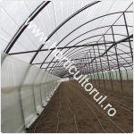 cultivarea-vinetelor-in-solarii_150