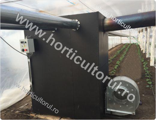 Cultura castravetilor in solar