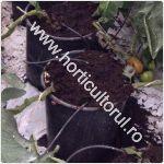 pamant-pentru-tomate-rosii_150