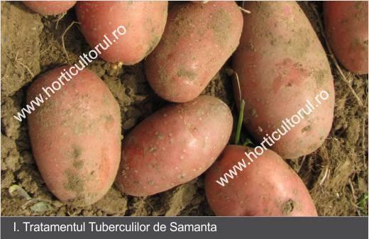 cum să tratați cartofi varicoși